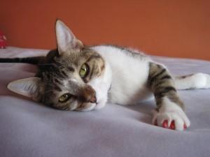 solucion contra arañazos gato