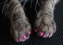 arañazos gato sofa