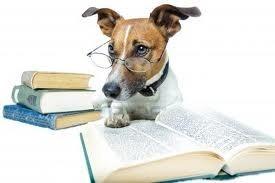 articulos sobre perros, temas