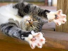 como evitar arañazos gato, alternativa desungulacion
