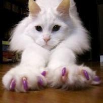 evitar que una gato arañe los sofas