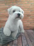 peluqueria canina cotton de tulear